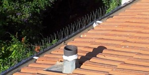 דוקרנים להרחקת יונים מותקנים על מרזב